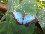 Butterfly house. It was EXTREMELY warm and uncomfortable, for me anyway in the Butterfly area....