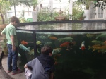 Large fish tank upon exiting the Butterfly house.