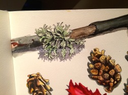 drawing natureIMG_6494