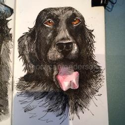 dogs of decemberIMG_7636