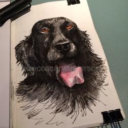dogs of decemberIMG_7661